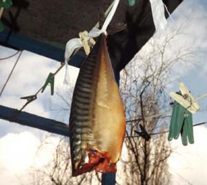 подвесить рыбу