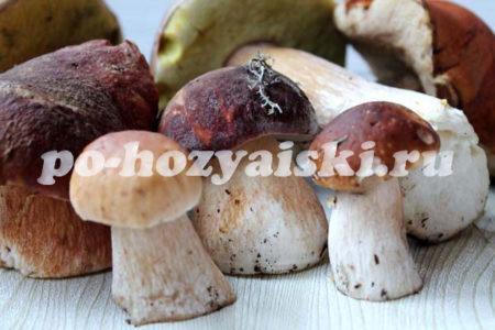 заготовка белых грибов