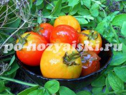 малосольные помидоры с аспирином